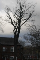 Over pruned, which has left the tree